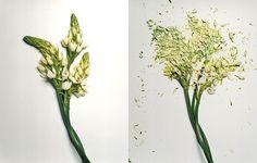 Broken Flowers by Jon Shireman