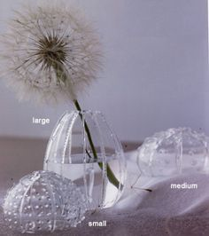The Glass Sea Urchin Vases by Roost