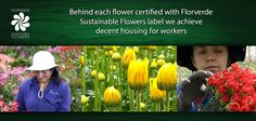 Behind each flower certified with #Florverde Sustainable Flowers label we achieve decent housing for workers. This reflects on the families that today have a better quality of life.