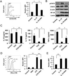Onionin A inhibits ovarian cancer progression by suppressing cancer cell proliferation and the protumour function of macrophages  #Cancer #cancer #cellbiology #Clinicalmedicine #Health #Health_Medical_Pharma #Immunesystem #Macrophage #macrophagepolarization #macrophages #medicine #murineovariancancer #ONAdirectlysuppressedcancer #ovariancancer #ovariancancer #RTT #therapeuticanti-ovariancancer #therapyforcancer #treatmentofpatientswithovariancancer #tumormicroenvironment #tumour