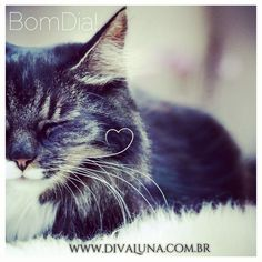 Bom Dia www.divaluna.com.br #cat #gato #bomdia #goodmorning #beauty