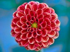 Google Image Result for http://static3.businessinsider.com/image/4ee10db76bb3f7c90300000d-400-300/flower-fibonacci.jpg
