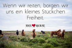 Wenn wir reiten, borgen wir uns ein kleines Stückchen Freiheit. #Pferde #reiten