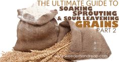 The Ultimate Guide to Soaking, Sprouting, & Sour Leavening Grains - Part 2 : Soaking