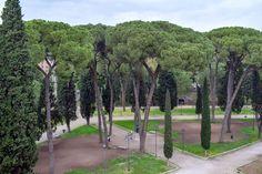 https://flic.kr/p/27pKuAX | Italian Stone Pine - Landscape, Rome Italy