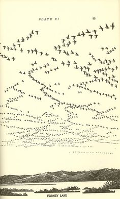 Flight patterns drawing.  This is just cool.