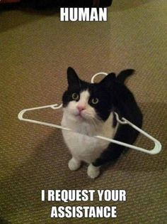 This cat needs some help | TrendUso #cat #cats #help #assistance #cute #adorable #funny #meme #hilarious #memes www.trenduso.com/...
