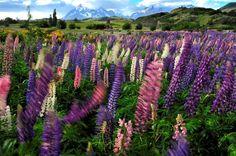 Patagonia - Torres del Paine - Chile