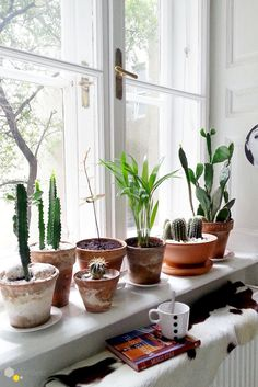 terracotta and greens- the perfect decor