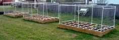 Square Foot Garden beds protected inside cages built from PVC pipe and chicken wire