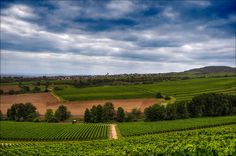 Rheingau Landscape