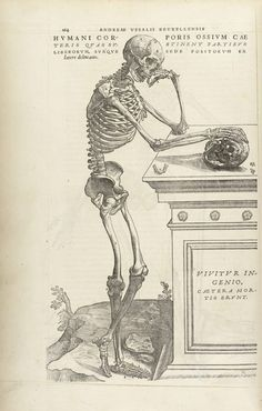 Andreas Vesalius, <i>De humani corporis fabrica libri septem ... A Human Skeleton Leaning Against a Tomb </i>(1543). Image courtesy of the Wellcome Library, London.