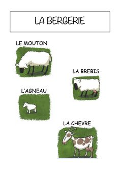 Vocabulaire de la ferme - Imagier simple pour la maternelle : la bergerie