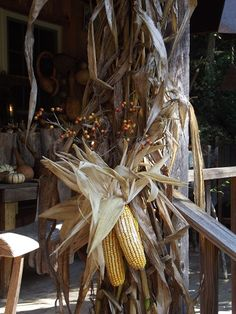 Autumn party or wedding. Indian corn.