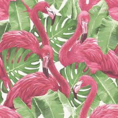 Illustration of Pink flamingo, monstera leafs, palm leaf. Vector vector art, clipart and stock vectors. Flamingo Wallpaper, Tier Wallpaper, Wallpaper Direct, Animal Wallpaper, Wallpaper Roll, White Wallpaper, Pattern Wallpaper, Flamingo Rosa, Wall Art