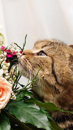 cat_flower_flowers_smell_85779_640x1136   von vadaka1986
