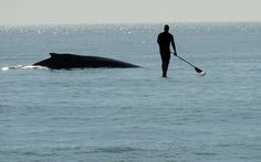 Whale watching at Topsail Beach.
