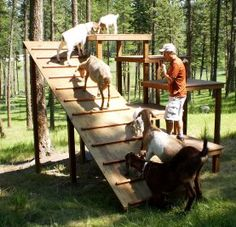 My first invention of goat toys did not go so well, it was slotted wood grates and a few of the goats got there legs stuck in them which was very scary! Thank heavens no one got a broken leg… Keeping Goats, Raising Goats, Goat Playground, Goat Toys, Goat Shelter, Goat Pen, Happy Goat, Goat Care, Nigerian Dwarf Goats