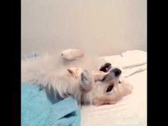 Cachorro confessa que peidou!