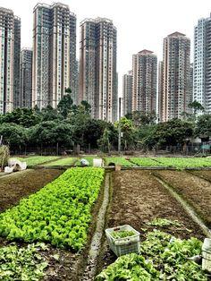 Saucy Onion: Hong Kong - Developers eye organic farms