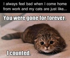 funny quotes and funny animals pictures pict) Funny Animal Memes, Funny Animal Pictures, Cute Funny Animals, Cute Baby Animals, Funny Cute, Funny Images, Cute Cats, Funny Kitties, Funniest Pictures