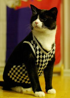 Isn't he a snappy dresser?  There are over 100 photos of cats in sweaters here - they are so cute!