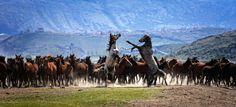 Yılkı Atları Wild Horses, Istanbul, Places To Visit, Big, Poster, Photography, Travel, Animals, Twitter