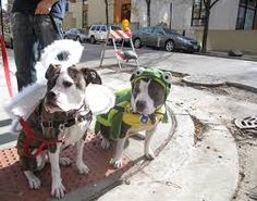 Image result for how to make an up dog halloween costume