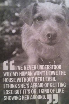 I read that in some places in America the dogs oner has to be on a leash    CRAZY