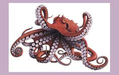 octopus illustration - Sök på Google