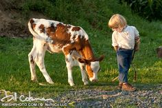 2773 a young amish boy stands with a baby cow