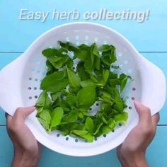 Amazing Kitchen Life-Hacks That Are Absolutely Genius. Useful Kitchen Hacks To M. Amazing Kitchen Life-Hacks That Are Absolutely Genius. Useful Kitchen Hacks To Make Your Life Easier. Cooking For Beginners, Cooking With Kids, Easy Cooking, Cooking Tips, Hacks Cocina, Kitchen Life Hacks, Kitchen Tips, Organizing Hacks, Storage Hacks