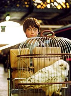 Daniel Radcliffe as Harry Potter - Harry Potter and the Philosopher's Stone