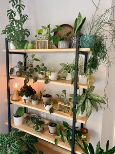 Room With Plants, House Plants Decor, Plant Decor, Room Ideas Bedroom, Bedroom Decor, Plant Shelves, Garden Shelves, Decoration Plante, Indoor Plant Pots