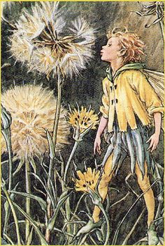 The Dandelion Fairy - Cicely Mary Barker