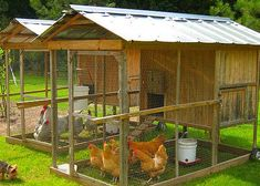 Raising chickens has gained a lot of popularity over the past few years. If you take proper care of your chickens, you will have fresh eggs regularly. You need a chicken coop to raise chickens properly. Use these chicken coop essentials so that you can. Portable Chicken Coop, Backyard Chicken Coops, Chicken Coop Plans, Building A Chicken Coop, Diy Chicken Coop, Backyard Farming, Chickens Backyard, Chicken Coop Blueprints, Mobile Chicken Coop