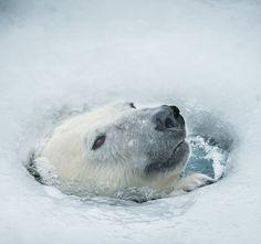 #animals #bears