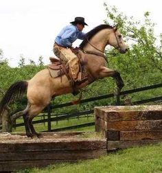 extreme trail horse obstacles - Google Search