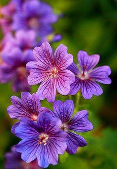 Flowers..Through The Lens