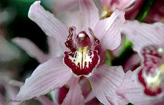 Orchidee in Aquarell von KreativesbyPetra Petra, Vienna, Canon, Christmas Ornaments, Flower, Holiday Decor, Spring, Photos, Pink