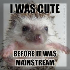 """I was cute before it was Mainstream"""