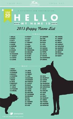 Most Popular Puppy Names 2013 Dogs dog names Top Dog Names, Dogs Names List, Female Dog Names List, Best Male Dog Names, Names For Girl Dogs, Cool Dog Names Boys, Girl Dog Names Unique, Boxer Dog Names, Female Animal Names