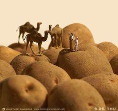 Woestijn aardappelen