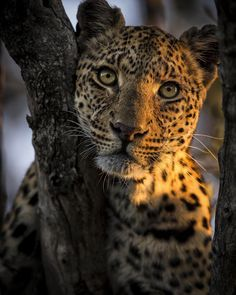 Beauty - Chris Fischer