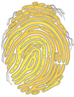 BACTERIAL FINGERPRINT: There is the possibility that microbial DNA may contain even more information about a person than does their human DNA.Lucy