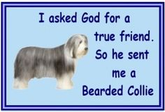 BEARDED COLLIE owners - just for you. One of over 200 breeds in our ebay store.