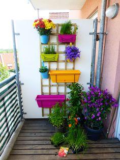 Kleiner Balkon mit verschiedenen Pflanzen und Kräutern in einem vertikalen Beet.(Diy Garden Balcony)