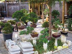 displaying bonsai outdoors !