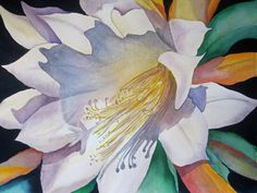 This watercolor is a desert cactus flower in watercolor