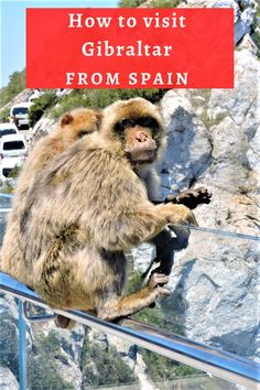 If you are traveling through the South of Spain, you might want to add a day trip to Gibraltar. Here's all you need to know including: how to get to Gibraltar from Malaga, how to visit the Rock of Gibraltar, where to see the monkeys and much more. An ultimate guide to a day trip to Gibraltar from Spain #gibraltar #gibraltarfromspain #spain